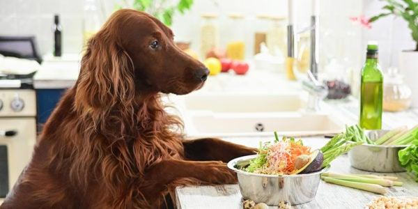 The Best Breeders of Pet Foods